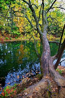 tree-stream